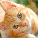 Decorar el hogar conviviendo con gatos