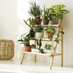 8 plantas de interior para tener una casa sana