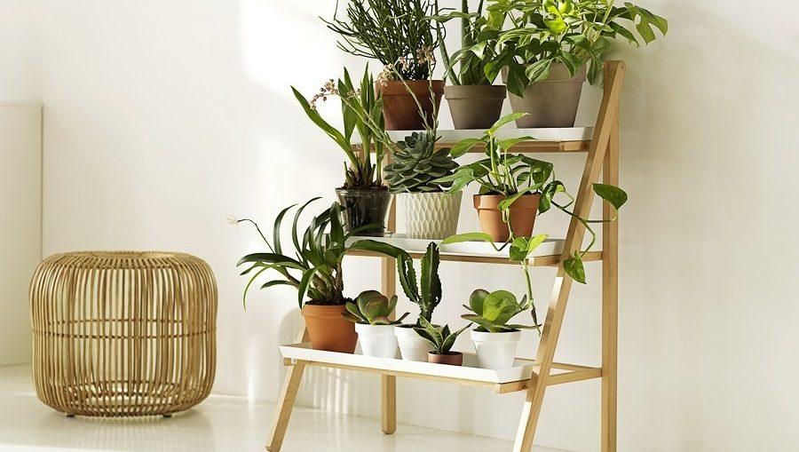 colocar algunas plantas en casa va ms all de la decoracin y lo esttico cultivar plantas en el interior de una casa puede beneficiar a tu
