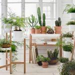 Plantas para decorar tu casa sin esfuerzo