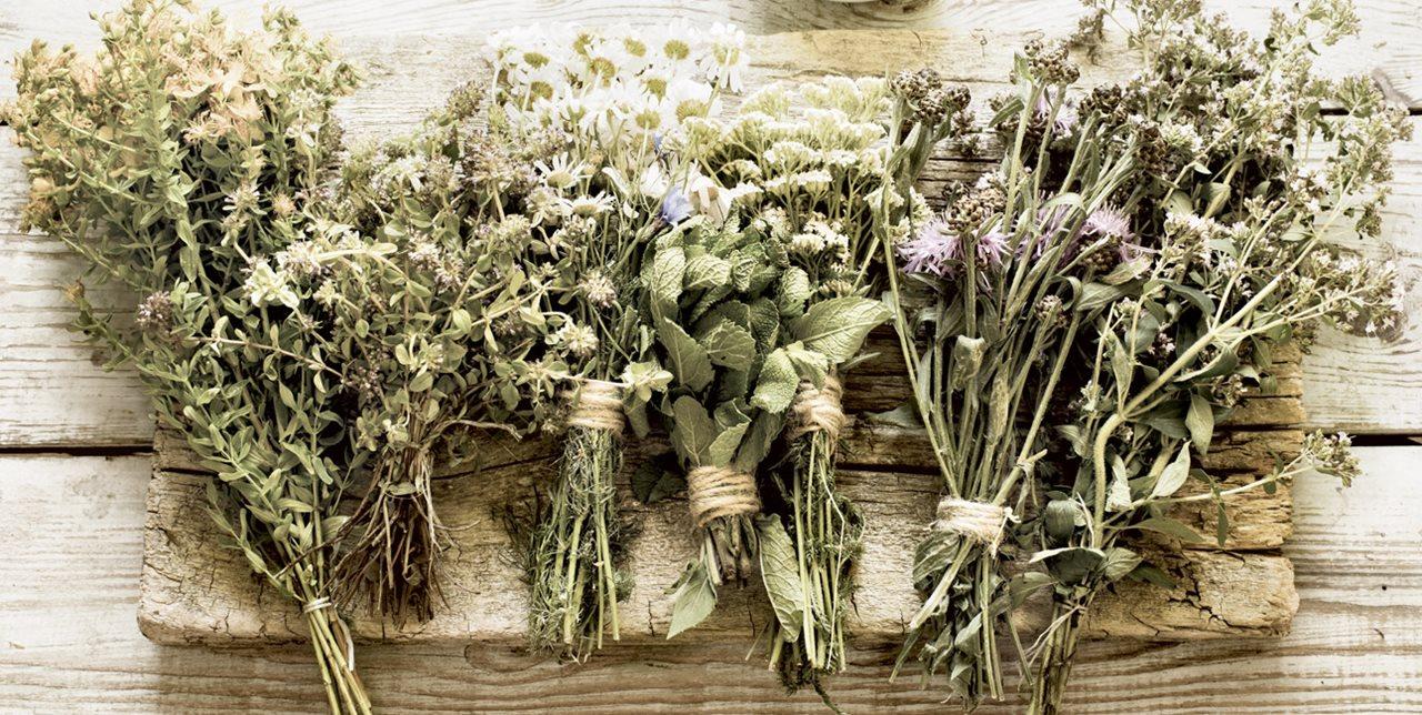 plantas medicinales ramo