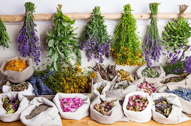 plantas medicinales varias