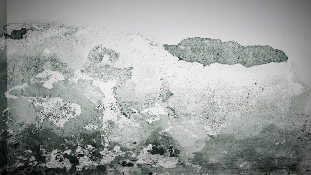 La importancia de respirar un aire purificado con ayuda de un deshumidificador