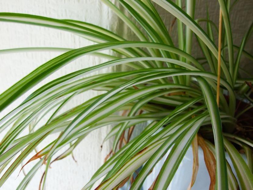 planta a domicilio