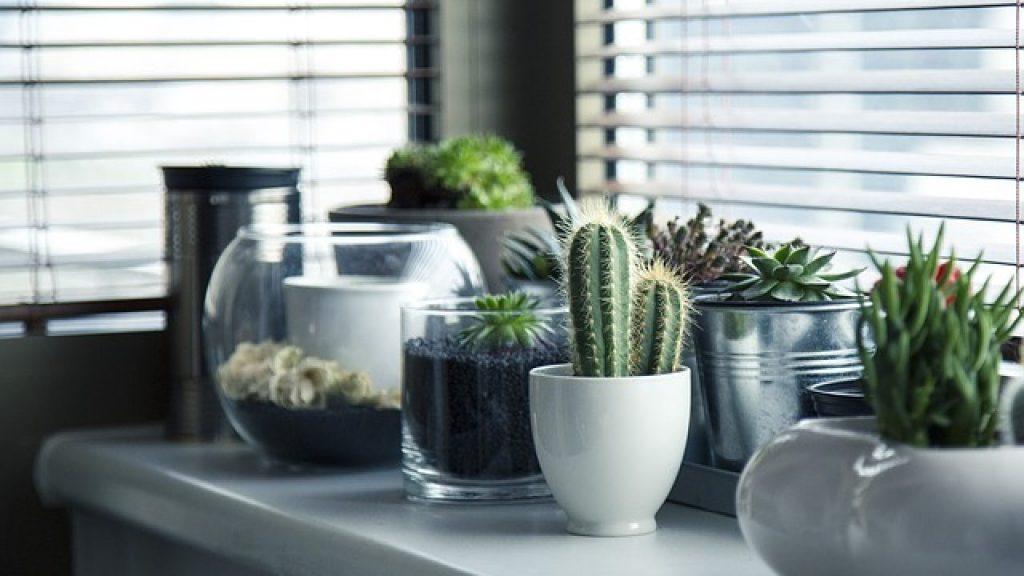 planta a domicilio flores casa