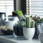 ¿Por qué tener plantas en casa?