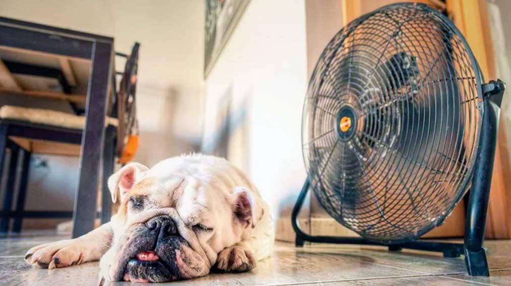 """¿Por qué debes tener un ventilador en el hogar"""""""