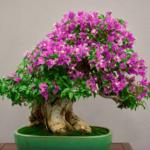 Los Bonsáis, una planta perfecta para tu hogar